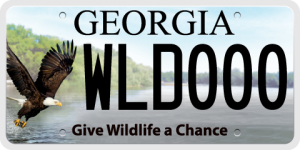 The Georgia Wildlife license plate featuring the bald eagle