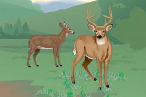 wildlife_deer