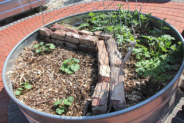 Mulch Added To The Base Of Vegetable Plants Is An Effective Way To Keep  Weeds At